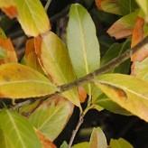 bruine bladeren door vorst