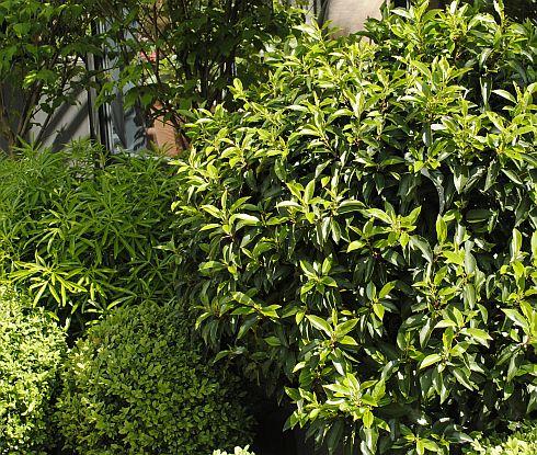 groenblijvende struiken volle zon